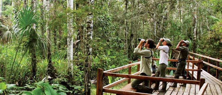En una selva con muchos árboles hay tres personas mirando por binoculares sobre un amplio deck de madera